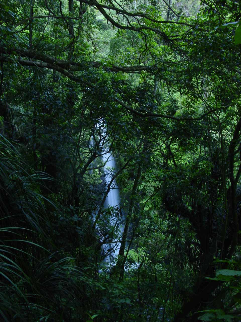 Looking back at what appeared to be the lower drop of Kaiate Falls through some thick foliage