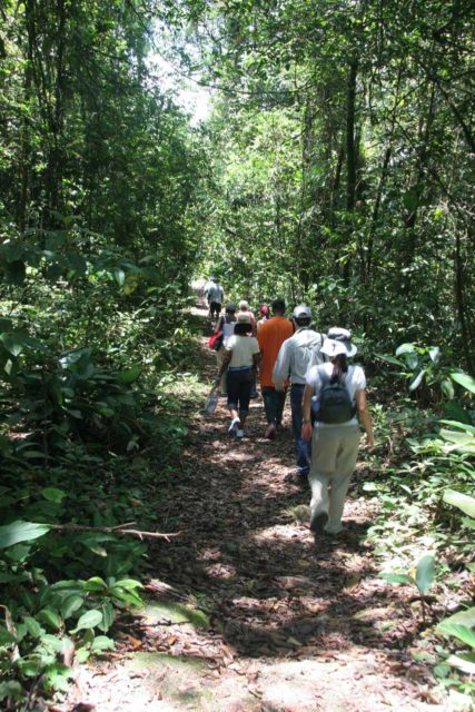 Kaieteur_080_08312008 - The tour group walking in the rainforest around Kaieteur Falls