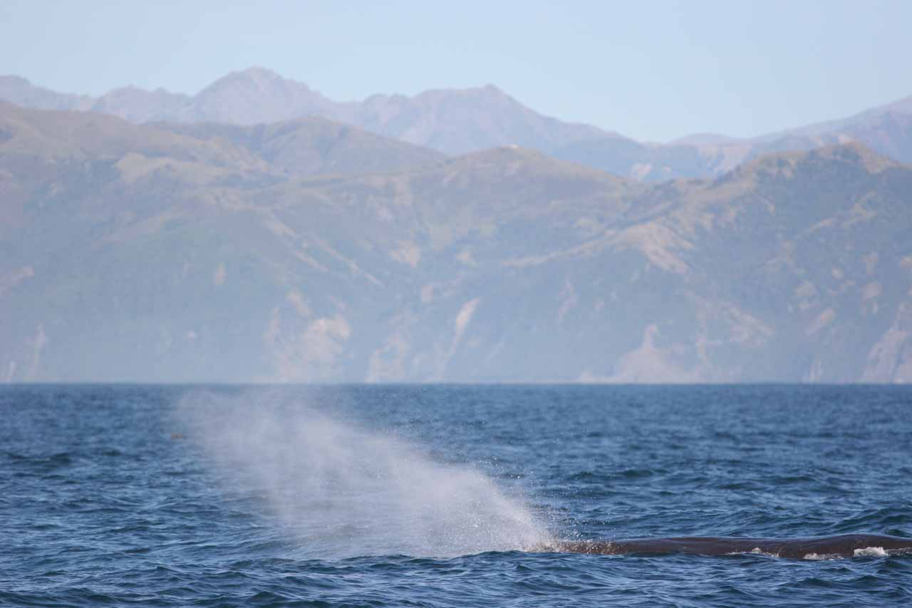Earlier in the morning, we went on one of the whale watching tours to see these sperm whales