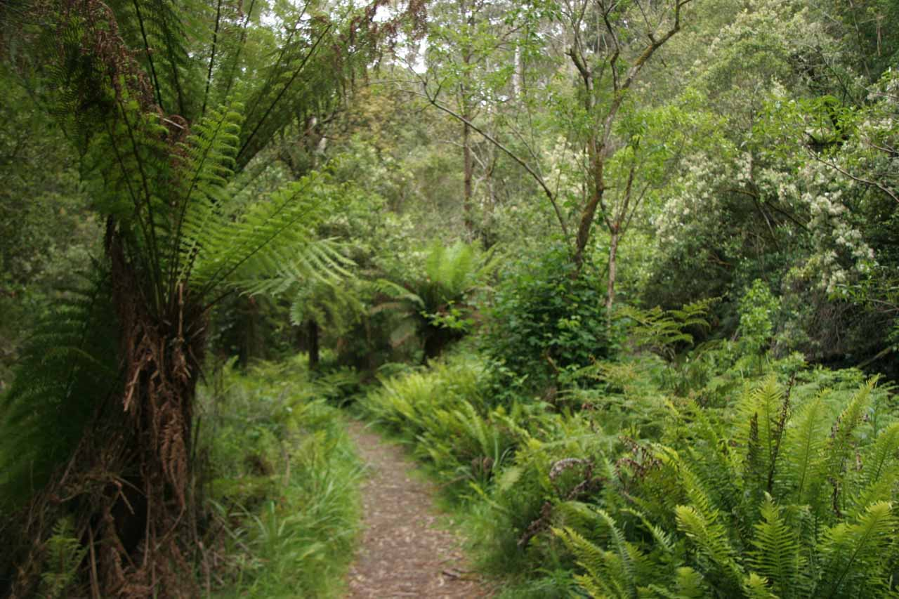 The trail passed by several tall ferns indicating that this was a high rainfall area