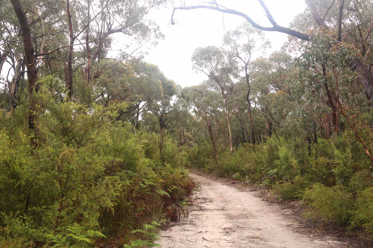 Now on the hiking track to Kalymna Falls, which appeared to be a former 4wd road