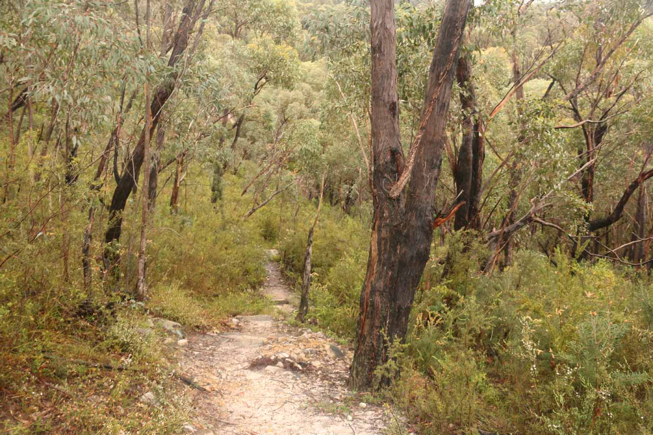 The final leg of the hike was considerably narrower and more overgrown than hiking on the 4wd track