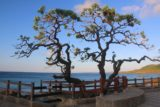 Kenting_122_10282016 - An interesting-looking tree by the Sail Rocks near Kenting
