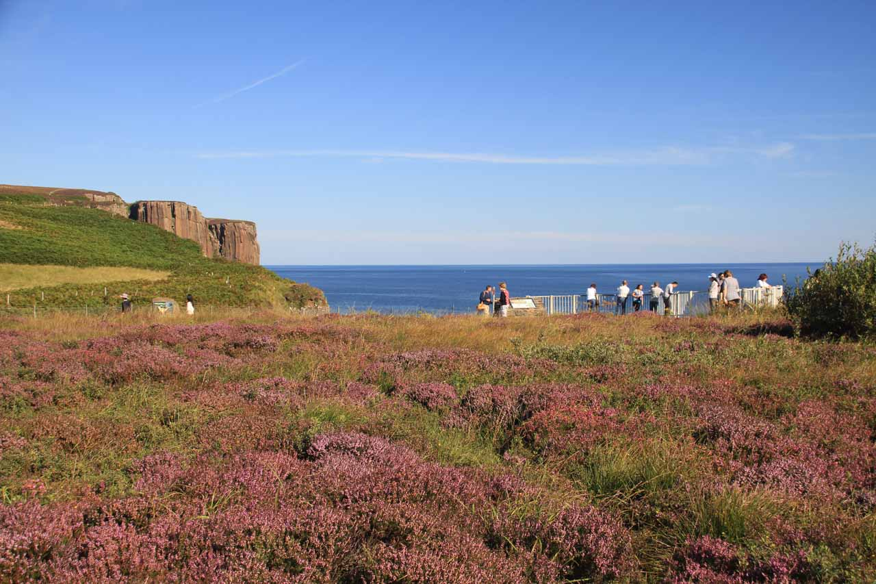 Looking over the mats of purple flowers towards the busier side of the overlook with Kilt Rock jutting out in the background