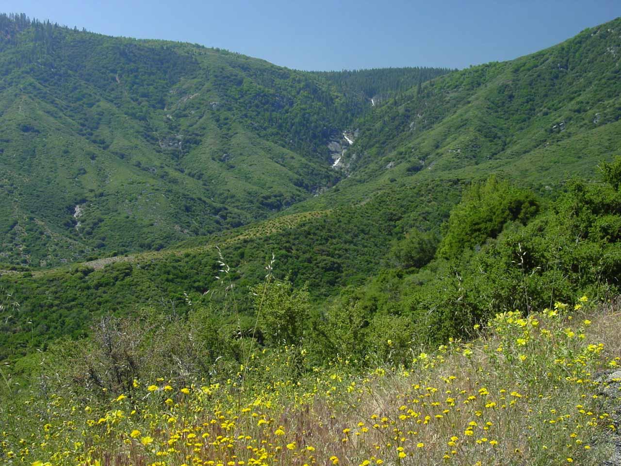 Wildflowers blooming before the cascade on Ten Mile Creek