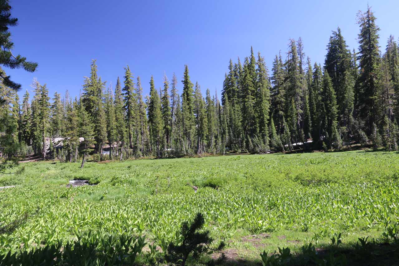 The Kings Creek Falls trail initially skirted by this fairly extensive meadow nourished by Kings Creek