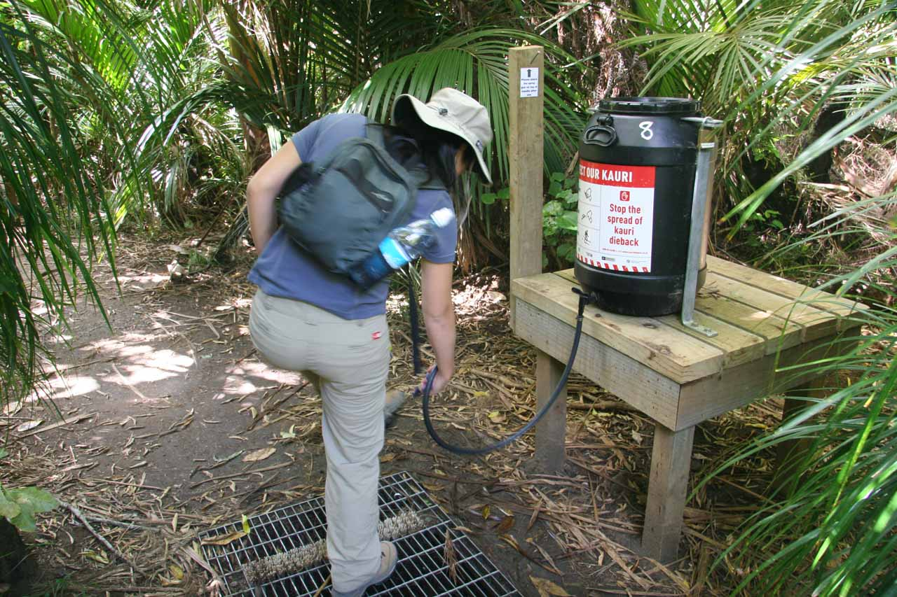 In January 2010, Julie and I re-visited Kitekite Falls together, but this time we had to spray something on our boots to help prevent the spread of Kauri Dieback Disease
