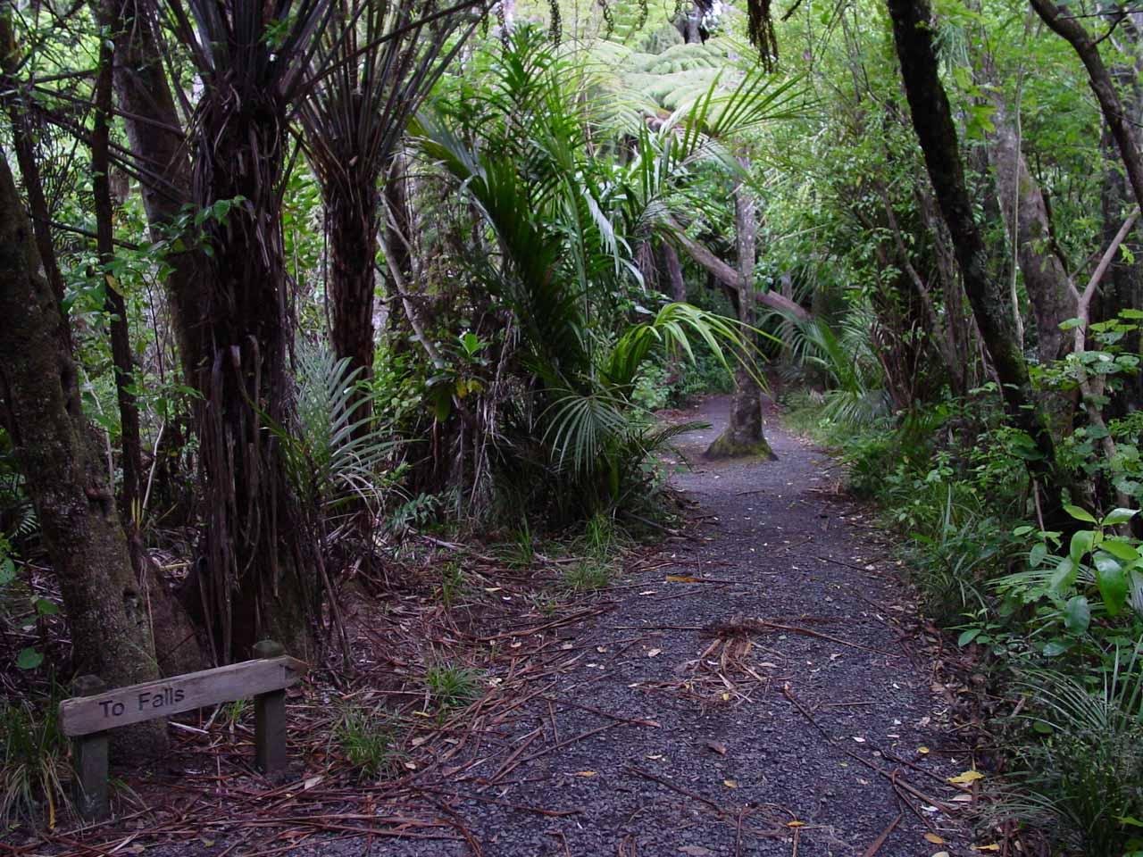 Walking through the bush track on the way to Kitekite Falls