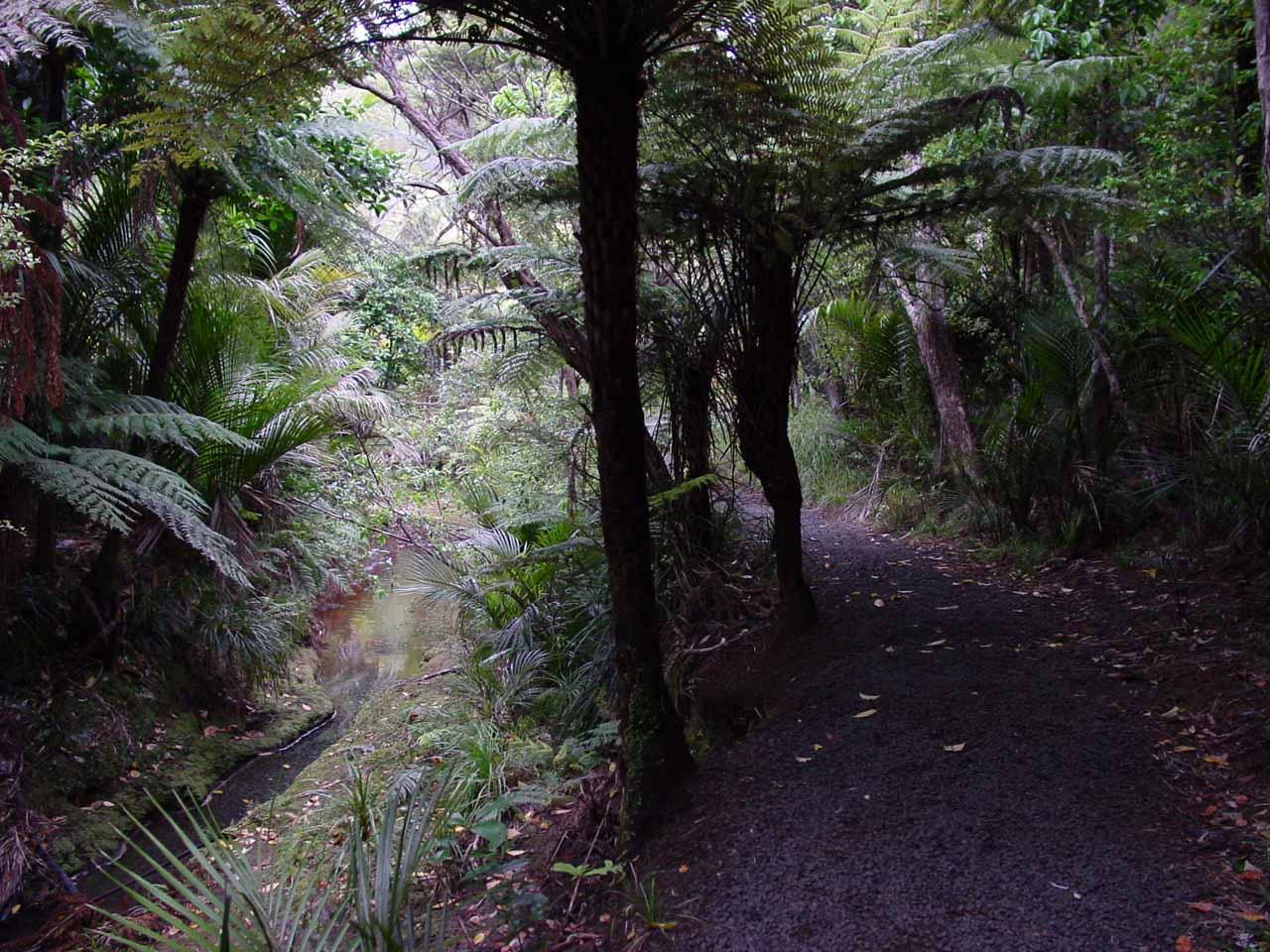 The track to Kitekite Falls then followed along the Glenesk Stream
