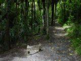 Kitekite_Falls_005_12022004 - The Kitekite Track ascending