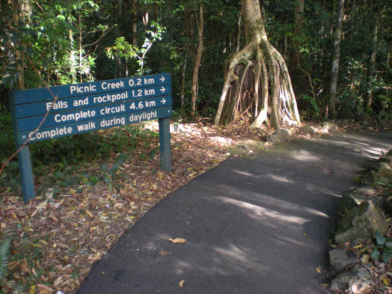 Attempting the Kondalilla Falls walk