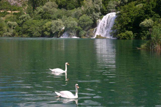 Krka_278_06032010 - Geese swimming before Mlinovi Falls