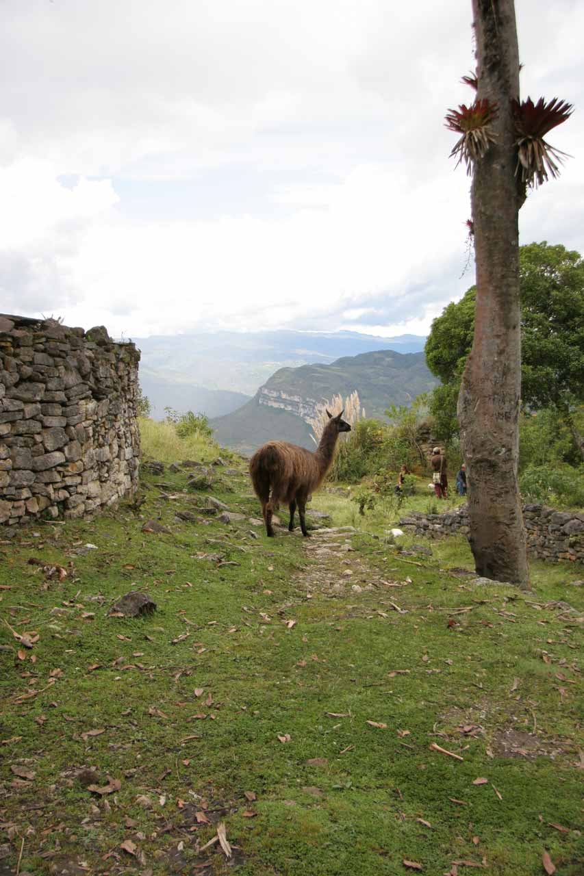 Even the llamas like the view here