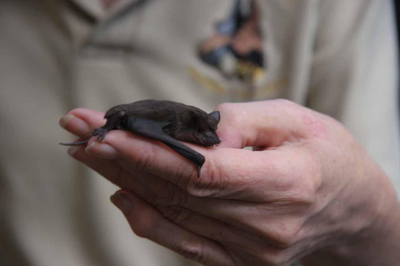 A tiny bat