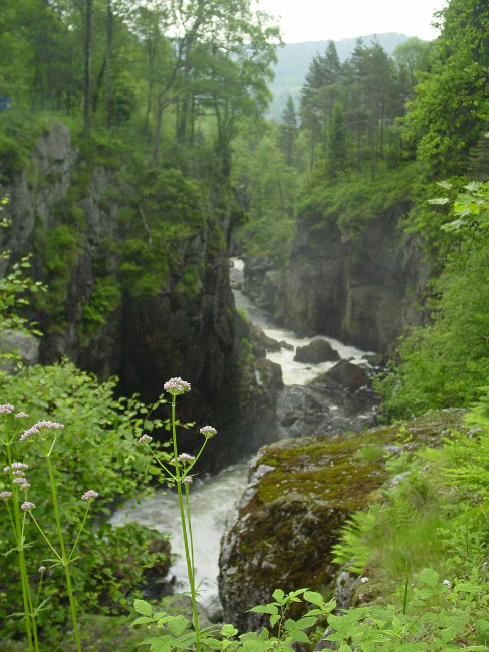 Looking downstream past Kvasfossen and some flowers from the near side of the bridge