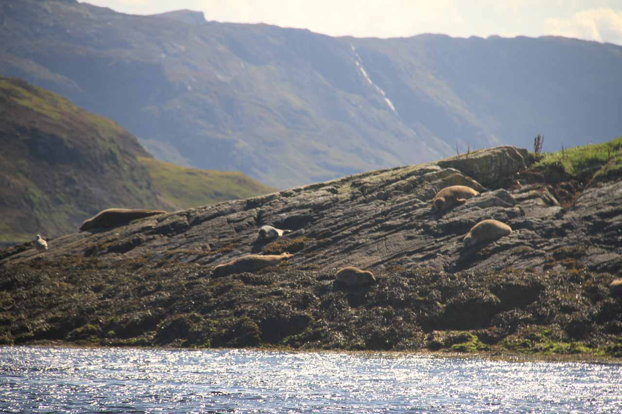 While on the boat tour from Kylesku, we spotted many seals such as this group chilling before the companion waterfall across the valley from Eas a' Chual Aluinn
