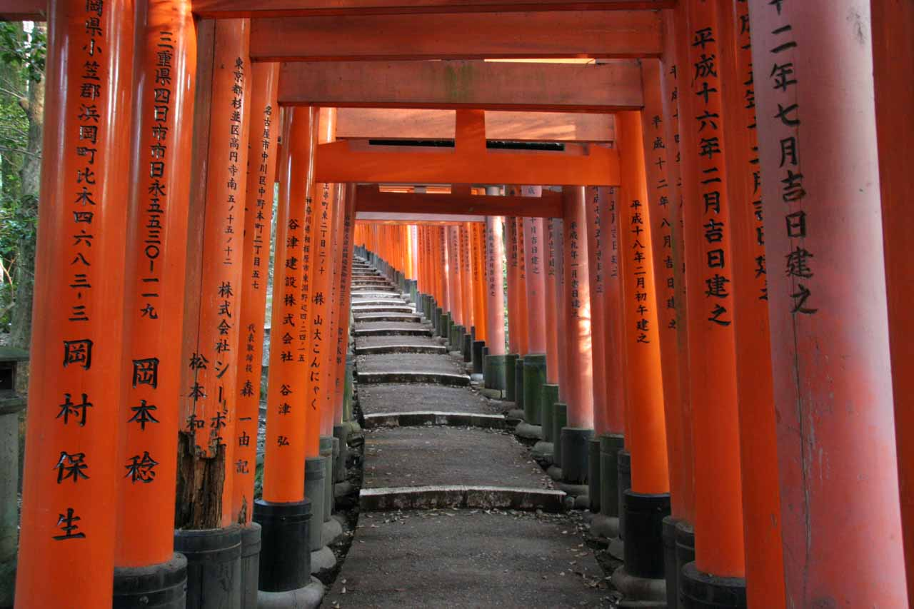 More torii gates