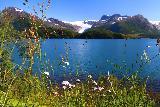 Kystriksveien_299_07082019 - Flowers blooming before Holandsfjorden backed by Engabreen arm of Svartisen as seen from Kystriksveien Rv17