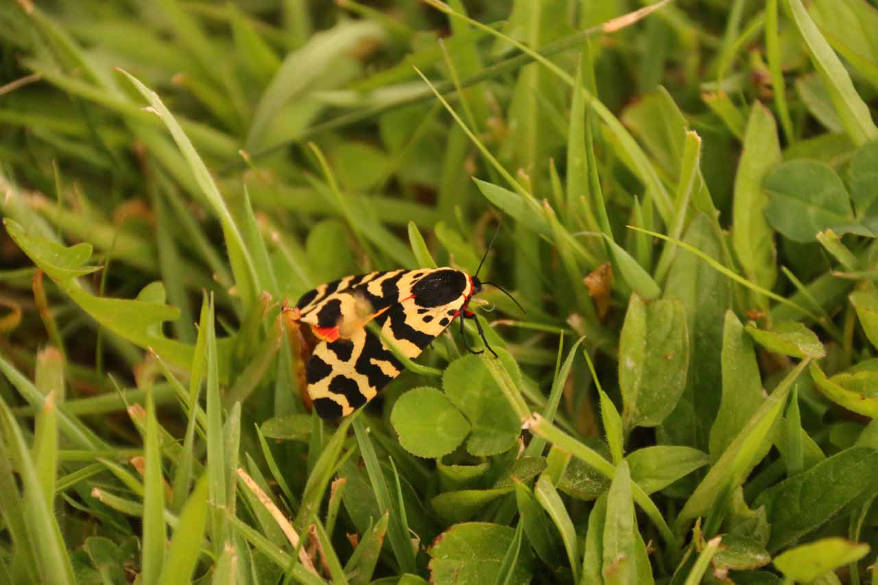 An unusual butterfly that a Spanish couple wanted to show Tahia while chilling around the man-made lake