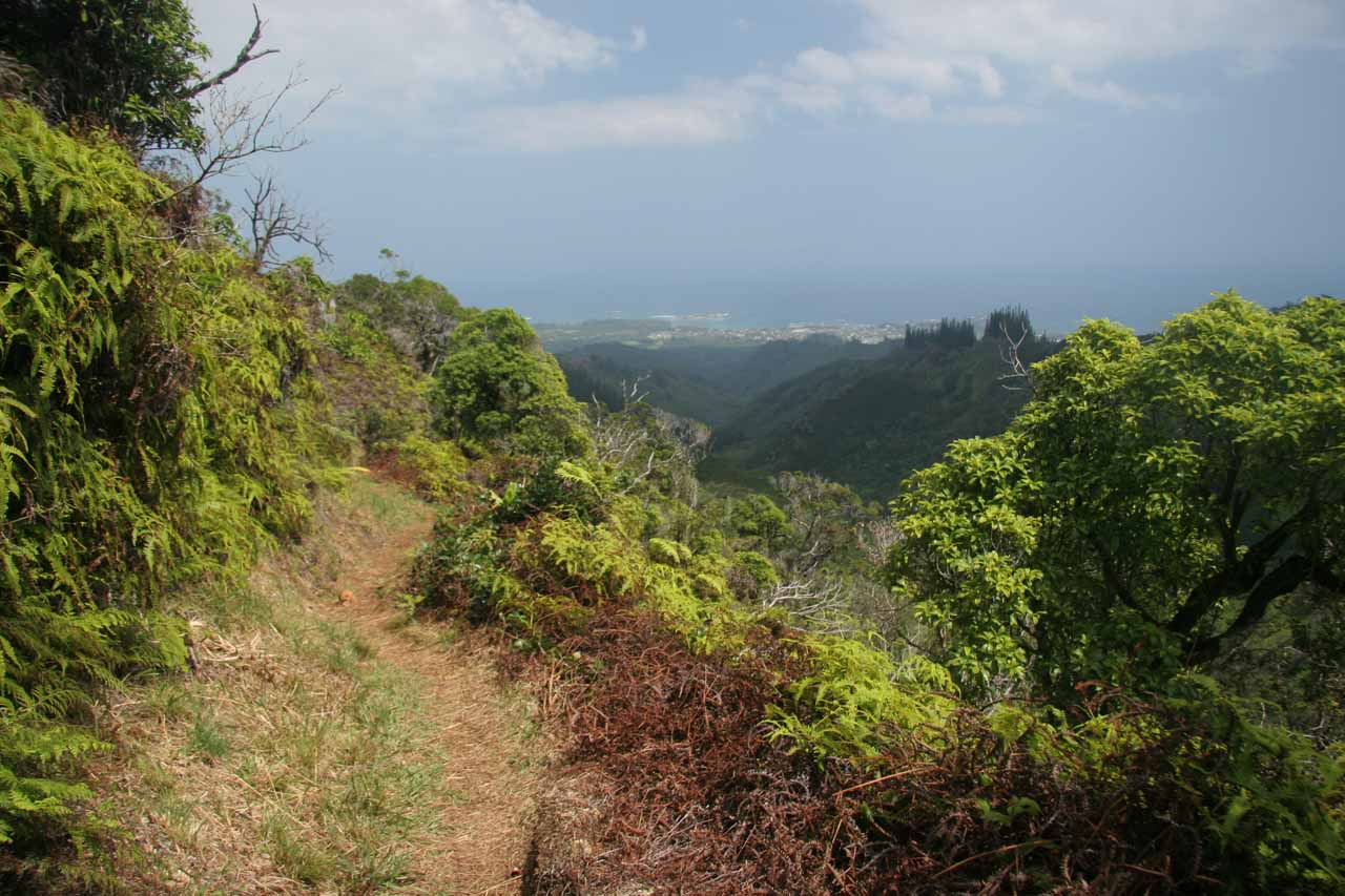 Nice views of La'ie towards the makai side of the La'ie Trail