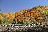 Lake_Elsinore_010_03172019 - Looking towards the superbloom from Lake Street across the Special Event parking lot