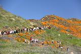 Lake_Elsinore_020_03172019 - Looking ahead at people walking towards the orange mats from the poppy superbloom