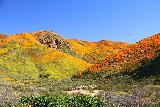 Lake_Elsinore_023_03172019 - Looking towards the colorful scene at Walker Canyon with large orange mats of California Poppies