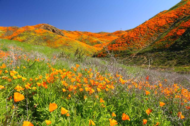 Lake_Elsinore_049_03172019 - On our most recent visit to Ortega Falls in mid-March 2019, we witnessed the rare superbloom in Walker Canyon for ourselves despite the crowds and the intense gridlock.