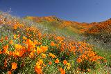 Lake_Elsinore_059_03172019 - Could you tell how much we were having fun photographing the superbloom?
