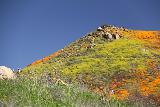 Lake_Elsinore_088_03172019 - Zoomed in on the people hiking up to the top of the ridge amidst the California Poppies superbloom