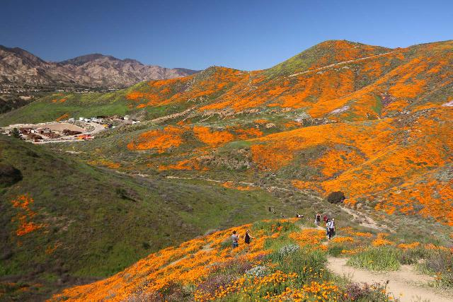 Lake_Elsinore_152_03172019 - Looking down from the ridge above Walker Canyon towards more of the California Poppies Superbloom in context of a quarry and the I-15 near Lake Elsinore