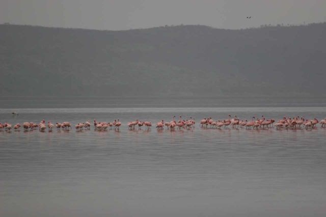 Lake_Nakuru_002_06212008