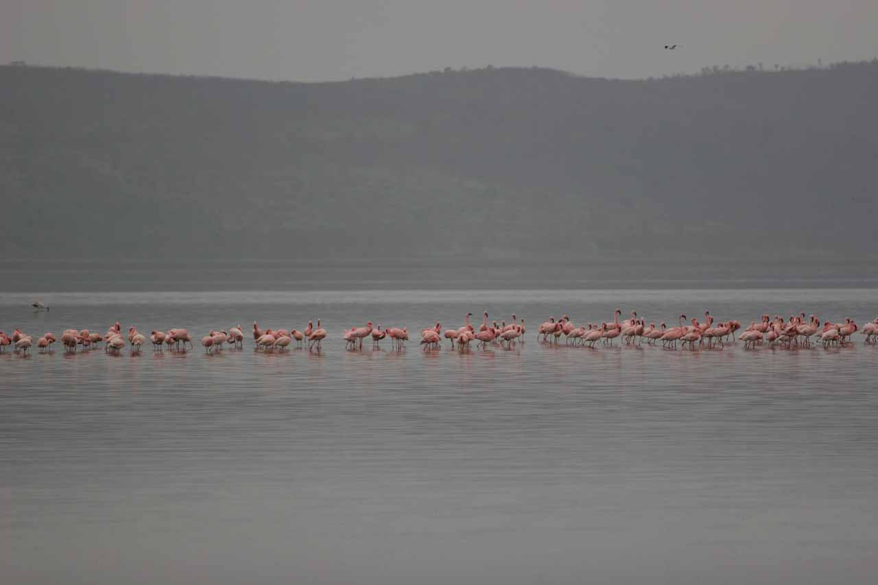 Flamingoes on the lake