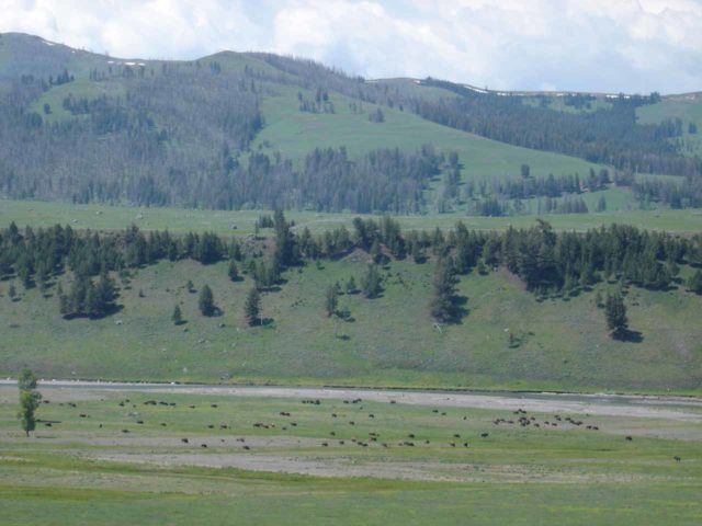 Lamar_Valley_006_jx_06242004