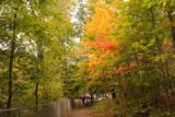 Lanternmans_Falls_139_10042015 - Autumn colors on the walkway back to the car park