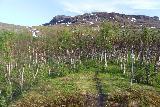 Lappland_122_07072019