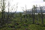 Lappland_195_07072019 - I wasn't sure what these fences did, but I wondered if they might have to do with acting as an avalanche break