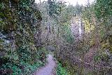 Latourell_Falls_009_04062021 - Descending the well-developed walkway towards Latourell Falls