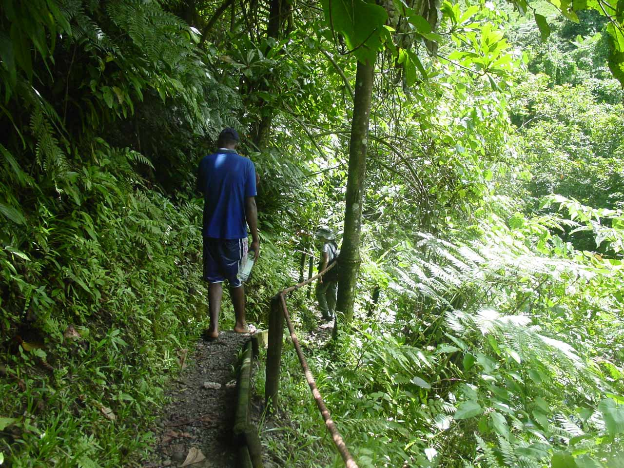 Still on the forested trail