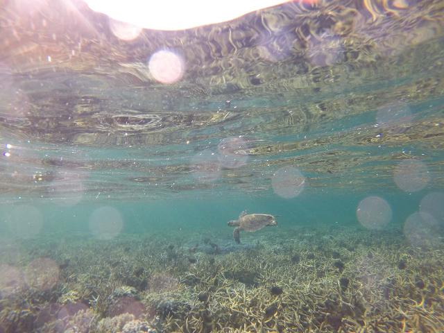 Le_Lagoto_187_goPro_11152019 - Because Savai'i Island was very quiet compared to 'Upolu Island, the snorkeling was very good, and I even spotted a sea turtle right off the waters of our resort on the northeastern shores
