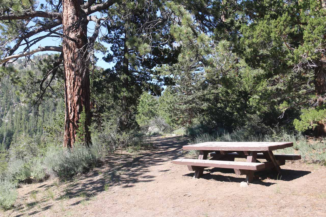 I noticed this trail-of-use beyond this picnic table and took a look to see where it went