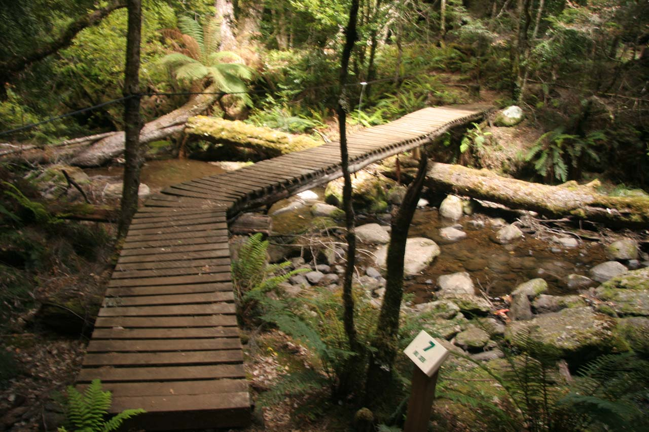 The wooden boardwalk meandering through a rainforest-like setting with some numbered signposts along the way