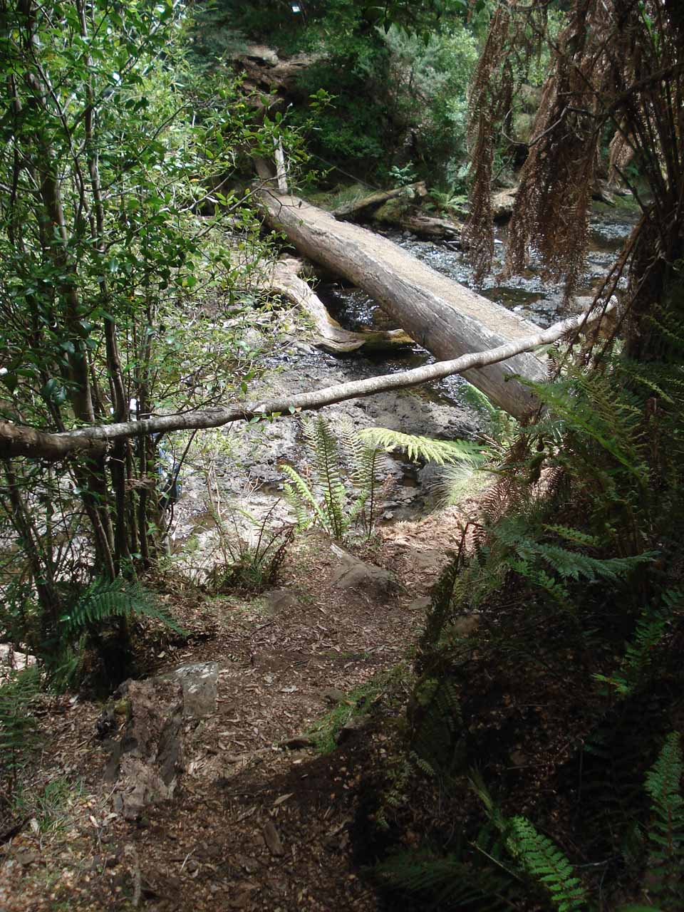 Looking back at the log bridge as we were about to rejoin the 4wd track back to the Lemonthyme Lodge. 11 years later, that bridge was replaced by a more typical sturdy bridge with railings