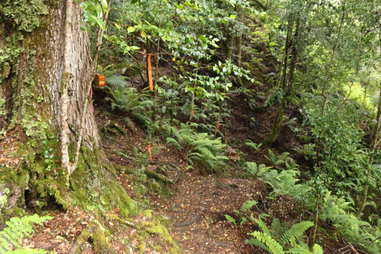 Lots of orange tape at this easy-to-miss trail junction where I kept straight to continue the descent to Champagne Falls
