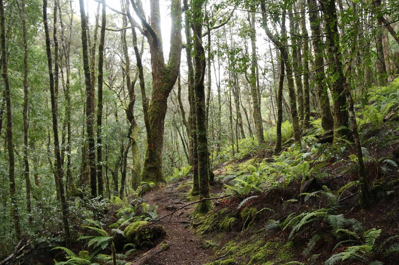 The connector track undulated through more dense rainforest terrain