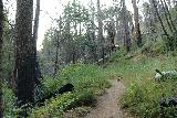 Lewis_Creek_106_08162019 - Passing through what appeared to be a burn area on the Lewis Creek Trail en route to Red Rock Falls