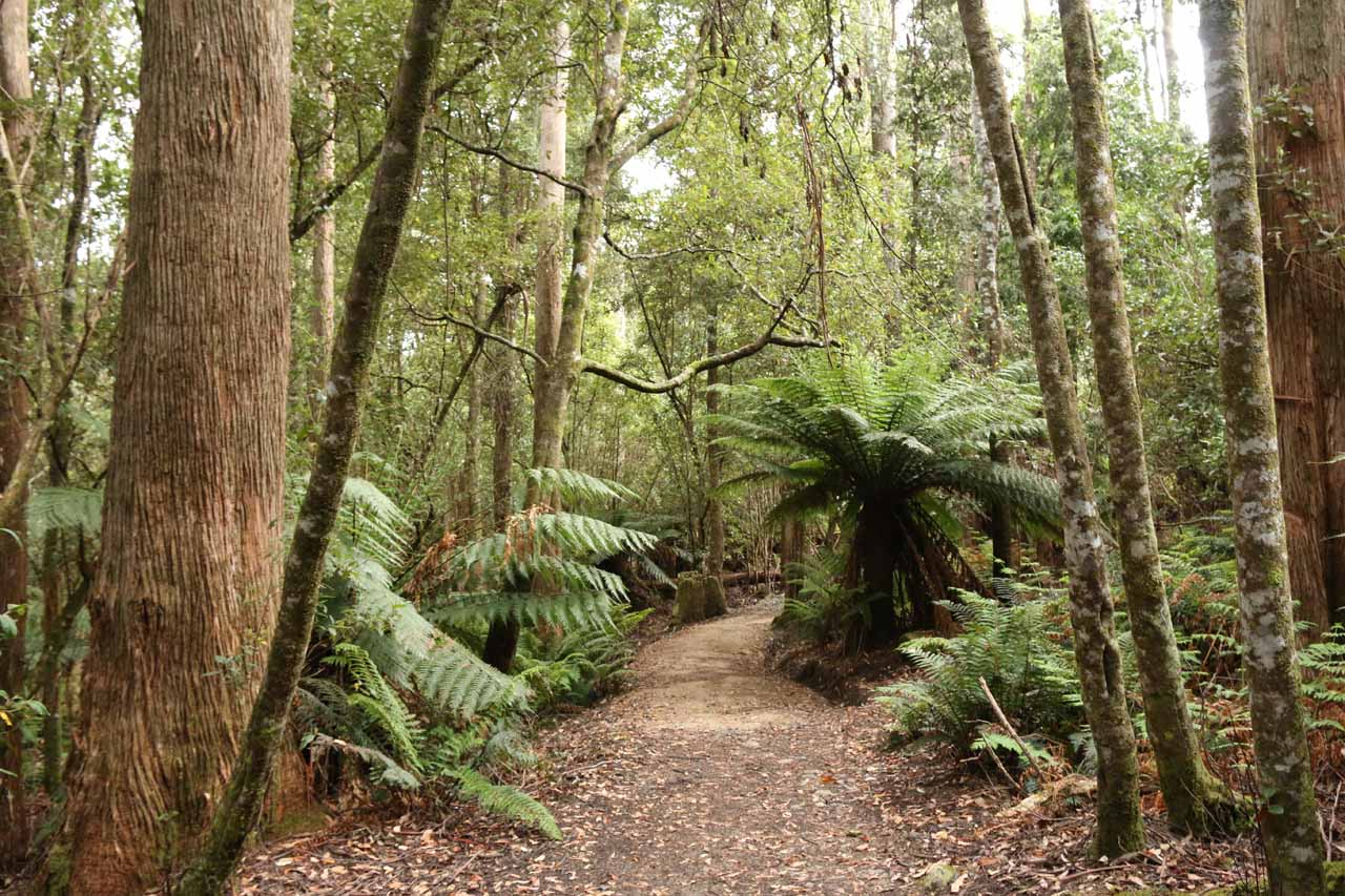 Initially, the track meandered through eucalyptus forest