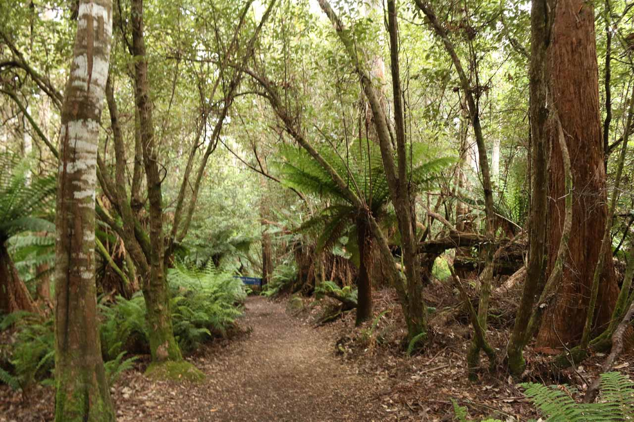 The track descended as it transitioned from eucalypt forest to fern-filled rainforest