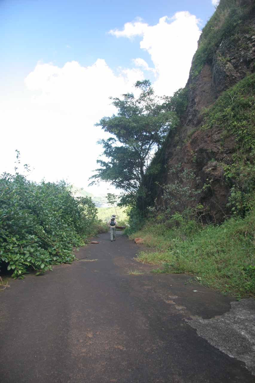 Descending the Old Pali Highway