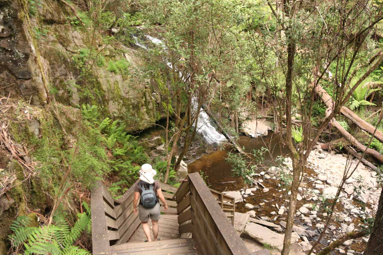 We first took the right fork and descended towards the First Falls or the Lower Lilydale Falls